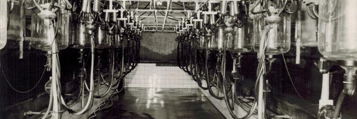 Geschiedenis van het Boshuis als melkveehouderij